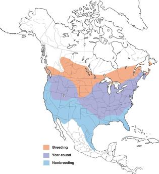 Goldfinch Range Map